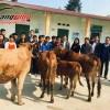 Hoàng Long CMS trao tặng bò giống giúp đồng bào nghèo Hà Giang